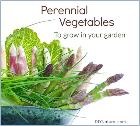 perennial garden vegetables my 5 favorite perennial vegetables for your garden diy