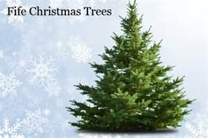 fife christmas trees edinburgh deal of the day groupon