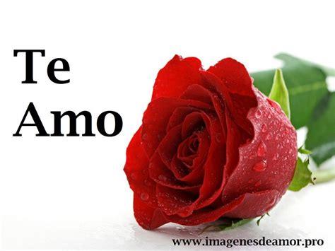 Imagenes Que Digan Te Amo Con Una Rosa | 18 im 225 genes de amor que digan te amo para dedicar