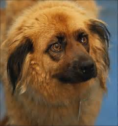 Dogs For Adoption Lucas County Dogs For Adoption 7 31 Toledo Blade