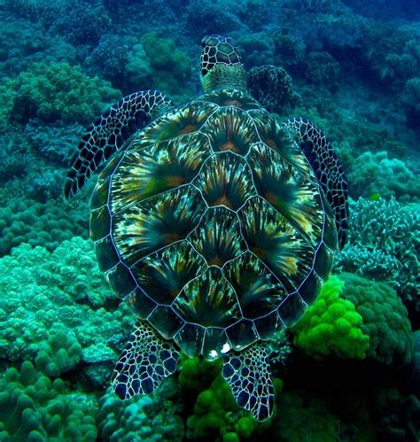 Kaos Amazing Graphic 20 Oceanseven les 25 meilleures id 233 es de la cat 233 gorie b 233 b 233 s tortues de mer sur b 233 b 233 s tortues