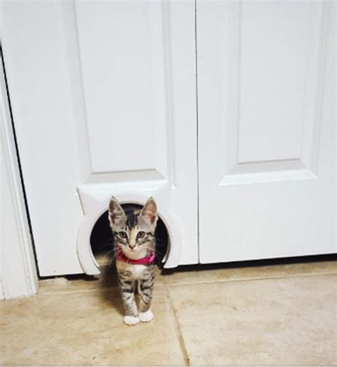 Cat Door Interior Your Doors And Your Cats Both Desperately Need The Pass