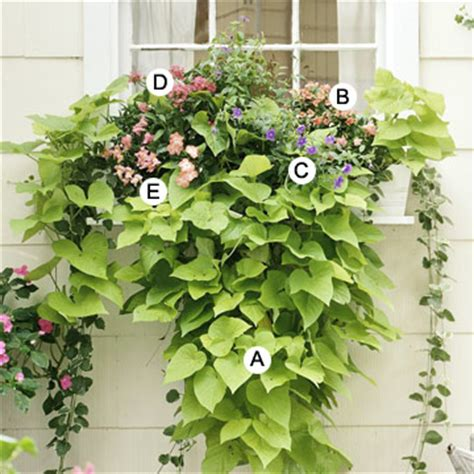 window box plants for sun 10 easy beautiful window boxes for sun