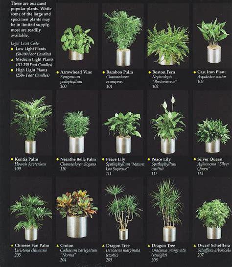 plants san diego interior plants