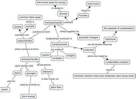 carbohydrates concept map meiosis terminology concept map answers