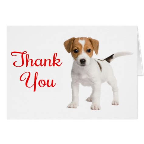 thank you puppy puppy saying thank you thank you terrier