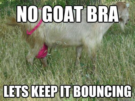 Goat Memes - goat meme