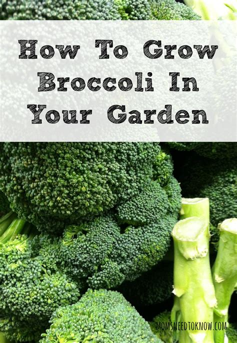 most difficult plants to grow most difficult plants to grow 10 most popular vegetables