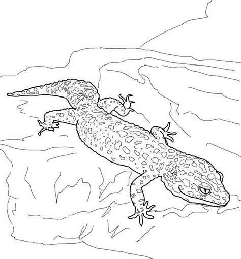 frilled lizard coloring pages frilled neck lizards coloring pages