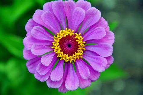 flower in a flower by auphoto photo weather underground