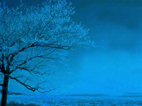 wallpaper blue tree blue tree wallpaper christian wallpapers and backgrounds