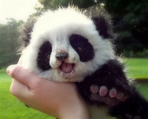 pictures of animals pictures of animals with a small panda 4234438 3500x2833 all for desktop
