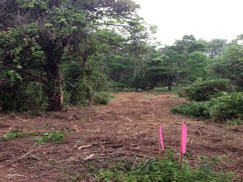 bushwackers land clearing