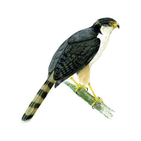 representative species birding biomes
