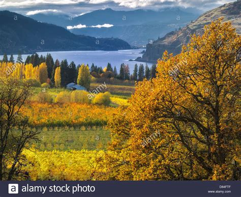 columbia colors orchard in fall colors and columbia river columbia river