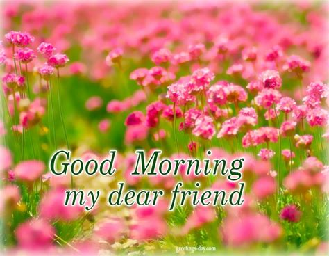 good morning  images gifs wishes