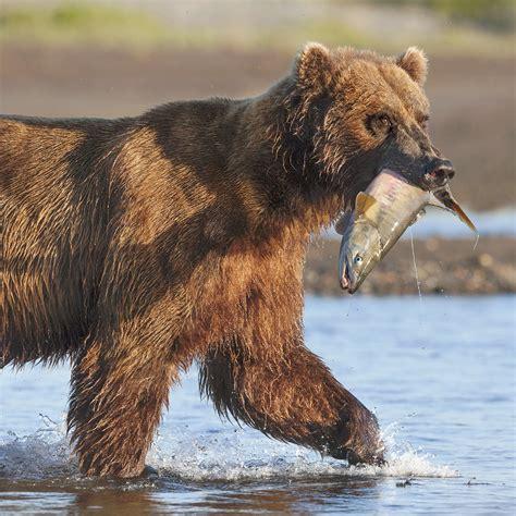 regarder we the animals gratuitement pour hd netflix grizzly film streaming