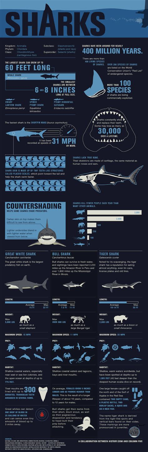 narrative coaching the definitive guide to bringing new stories to books the definitive shark infograph