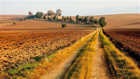 nature landscape field road dirt road trees