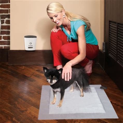 dogs that are easy to house train potty train your dog the easy way petsafe 174 articles