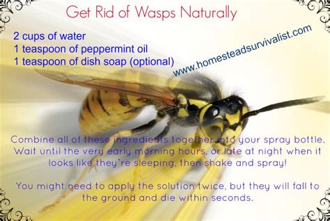 how to get rid of wasps in backyard 1000 ideas about get rid of wasps on pinterest getting