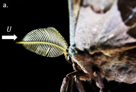 3d printed moth antennae uses smell to detect drugs and explosives 3d printing industry