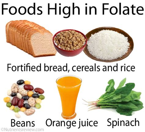 best sources of folic acid the gallery for gt foods high in vitamin b