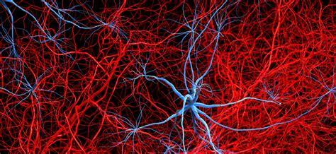 innere angiologie angiologie 187 innere medizin der internist 187 fachgebiete