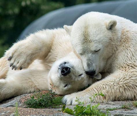 zoologischer garten berlin telefonnummer zoologischer garten berlin berlin kontaktieren dialo de