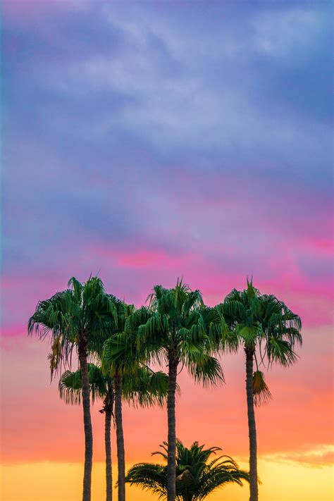 colorful palm trees colorful palm trees iphone wallpaper idrop news