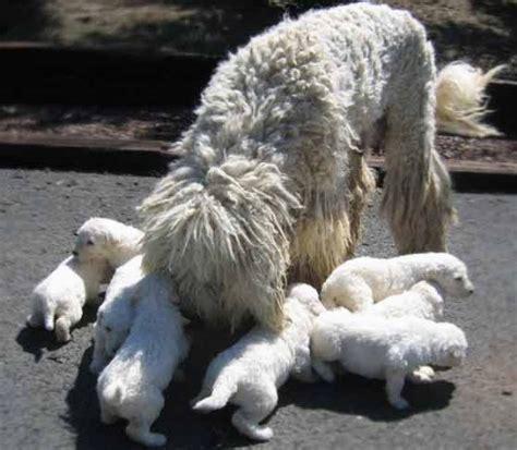 bagno casa di cagna lavare una cagna dopo il parto domande e risposte cani