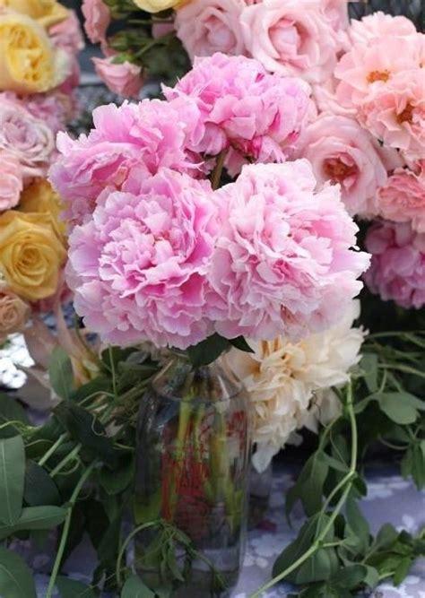 fiori in vaso da interno fiori da vaso piante appartamento