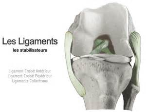 chirurgie du genou les ligaments