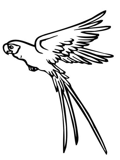 flying parrot coloring pages flying squirrel coloring page cliparts co