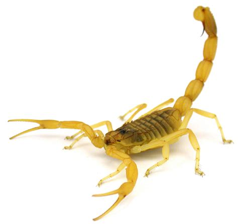 scorpion images united flight delayed after scorpion reported aboard