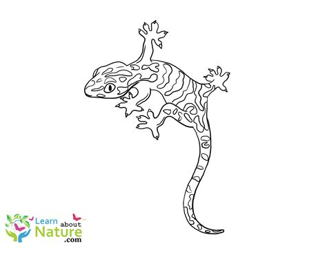 Learn About Nature Gecko Coloring Page Learn About Nature Gecko Insect Coloring Page