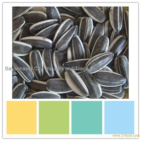 black sunflower seeds 5009 for human consumption big