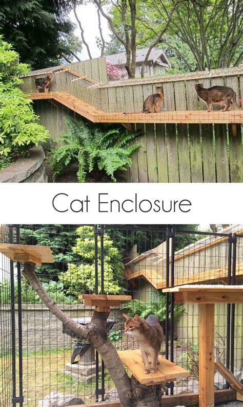 backyard enclosures awesome large diy backyard cat enclosure cuckoo4design