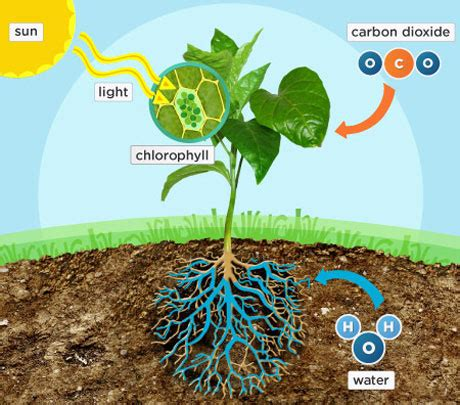 how to make flower food how plants make their own food photosynthesis natural