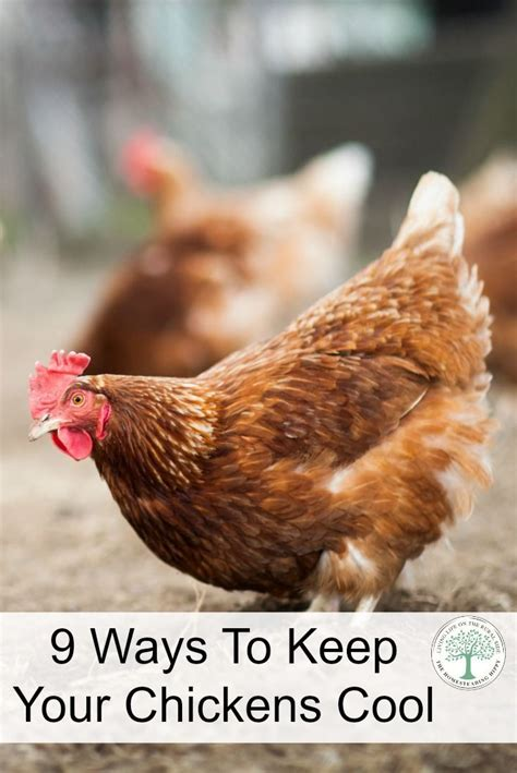 2062 Best Backyard Chickens Images On Pinterest Chicken Can I Keep Chickens In My Backyard
