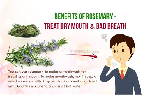 Medicinalcosmetic Uses Of Rosemary by 40 Health Benefits Of Rosemary Its Uses Side