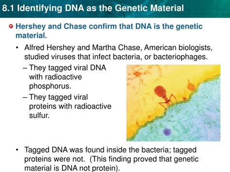 section 1 dna the genetic material ppt key concept dna was identified as the genetic