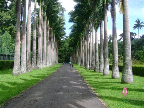 Peradeniya Botanical Garden Nilneth Sri Lanka Peradeniya Botanic Gardens