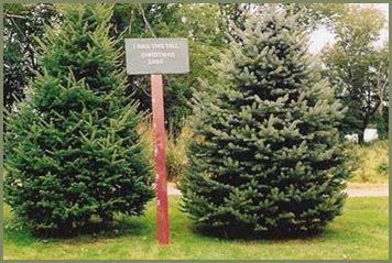 tree farm newbury mass welcome to crane neck tree farm