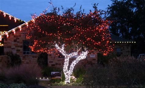 howto wrap christmas lights around tree branches tree wrapping lighting plantscape solutions of tx