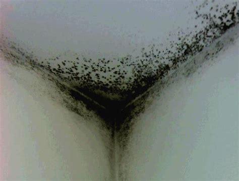 come togliere la muffa dal soffitto sei stanco dei problemi di muffa sui muri
