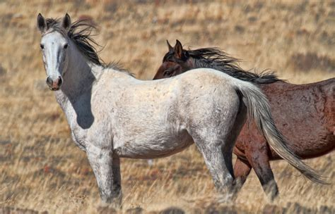 pictures of mustang horses mustang photos images of mustang horses