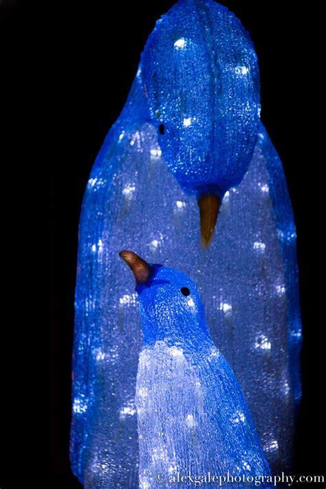 59 Best Penguin Christmas Lights Images On Pinterest Penguin Lights