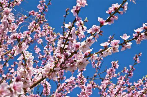 ci di fiori roma fiori ramo villa san biagio