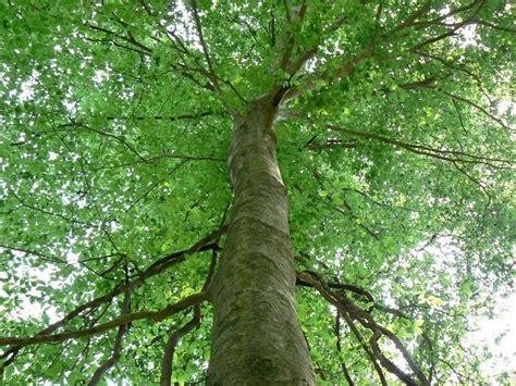 alberi alto fusto da giardino alto fusto domande e risposte giardino alberi ad alto